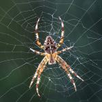 Biologische Spin Bestrijding - PostCleaning.eu